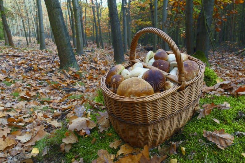 Mushroom season stock photo