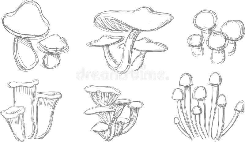 Download Mushroom Sketch Set stock illustration. Illustration of drawing - 32077942