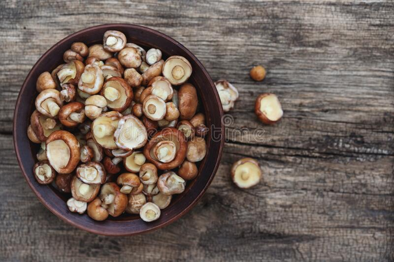 Mushroom Suillus over Wooden Background. Spring Mushrooms. Suillus edulis over Wooden Dark Background, close up on wood rustic stock photo