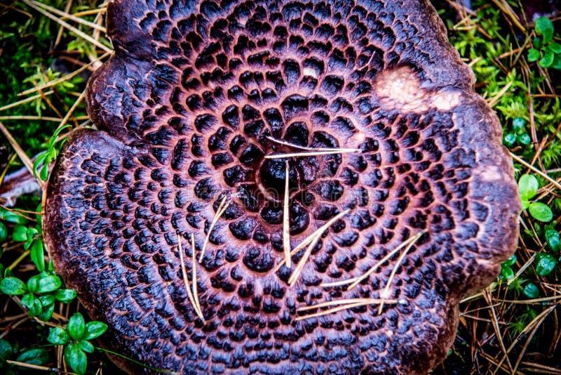 Mushroom texture closeup royalty free stock image