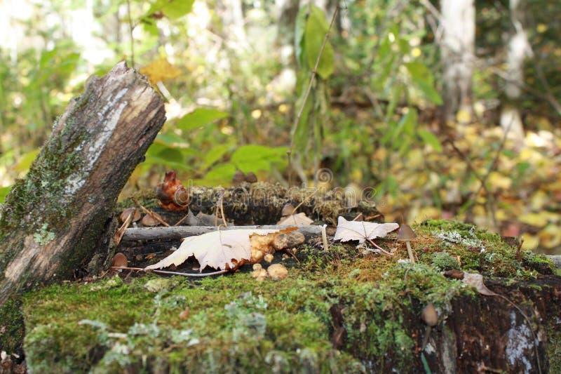 Mushroom village on royalty free stock photos