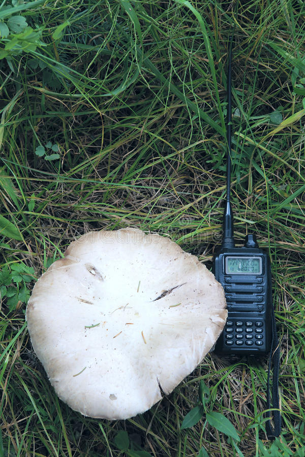 Mushroom and walkie-talkie. The walkie-talkie is placed near by large mushroom royalty free stock photo