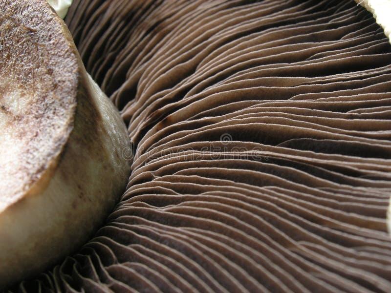 mushroom051105 免版税图库摄影