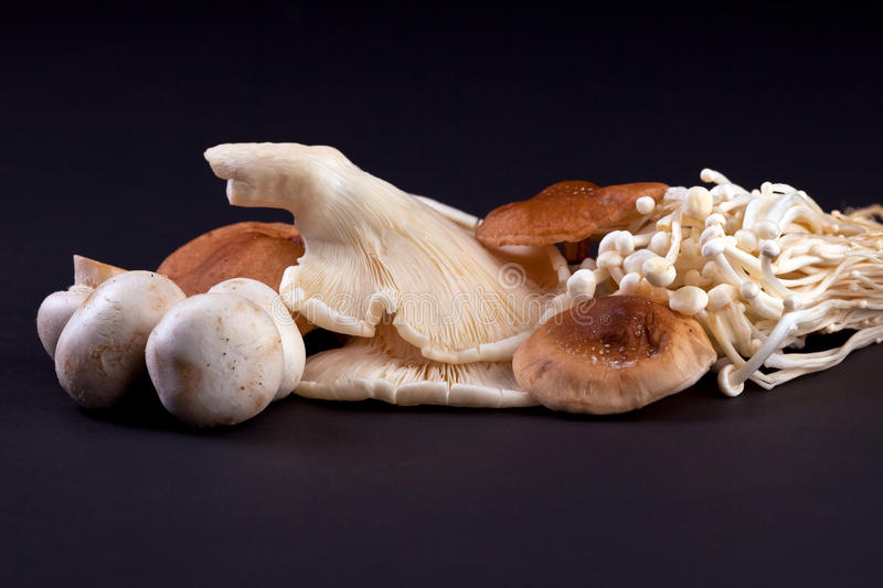Mushrooms. This is a group of mushrooms including Button, Oyster, Shiitake and Enoki stock photo