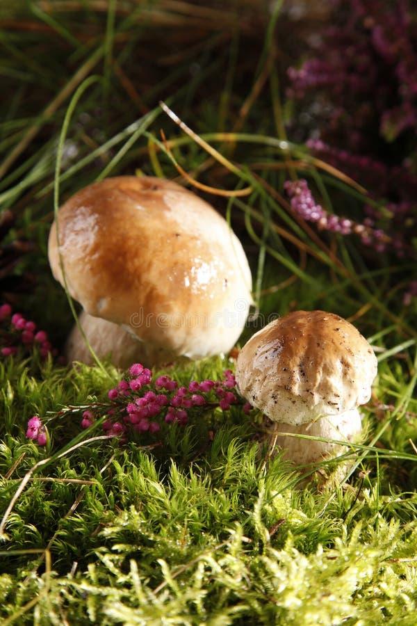 Free Mushrooms Royalty Free Stock Photography - 15978597