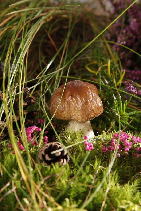 Free Mushrooms Stock Image - 15994301