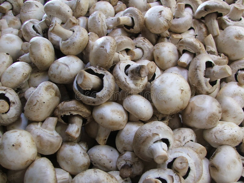 Download Mushrooms stock image. Image of produce, fungus, grocery - 168167
