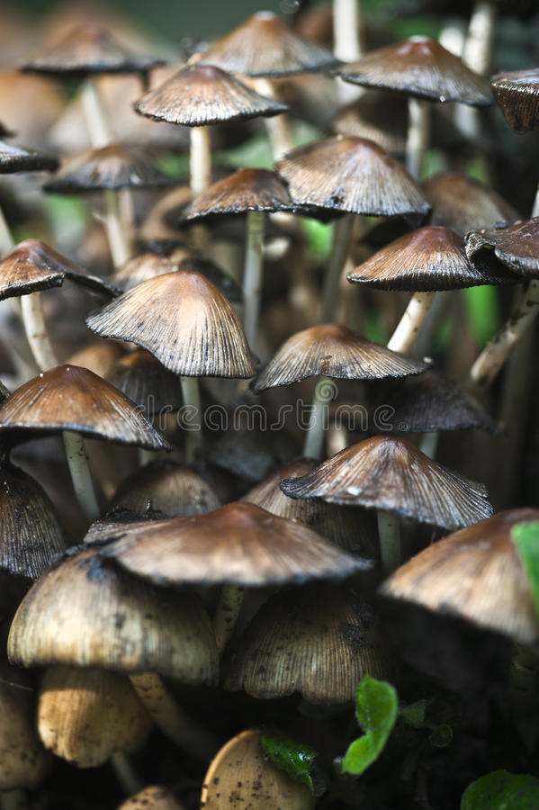 Download Mushrooms stock image. Image of colour, dusk, color, afternoon - 19588565