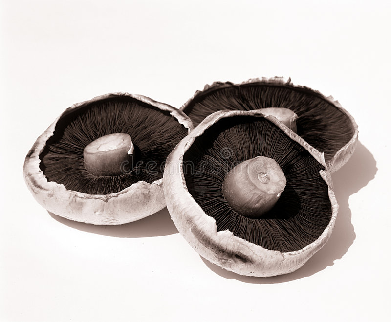 Mushrooms. Three Mushrooms on white background stock photo