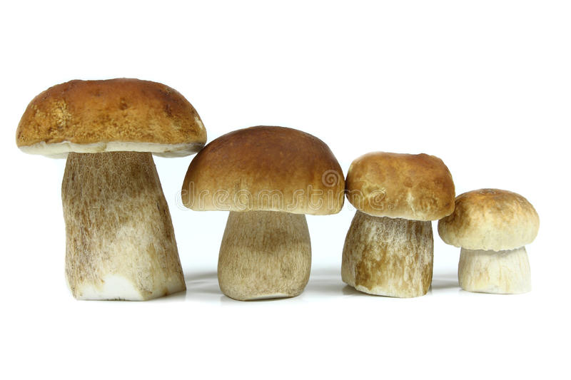 Download Mushrooms Royalty Free Stock Photography - Image: 26514287