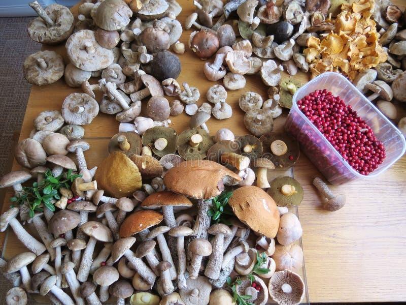 Download Mushrooms stock image. Image of mushrooms, cowberry, berries - 26611803