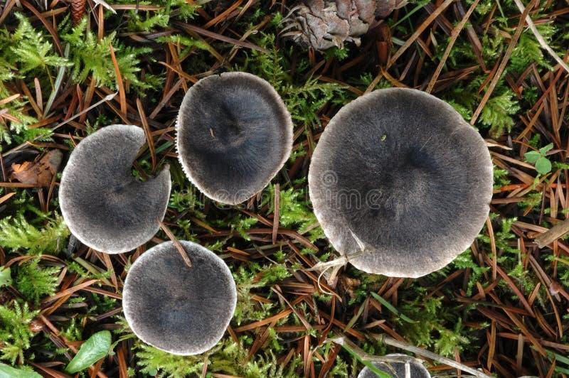 Download Mushrooms stock image. Image of fungus, oregon, umpqua - 26638823