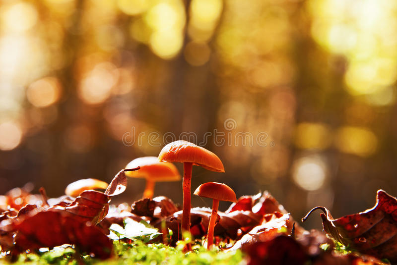 Download Mushrooms stock image. Image of autumn, plant, closeup - 27386499