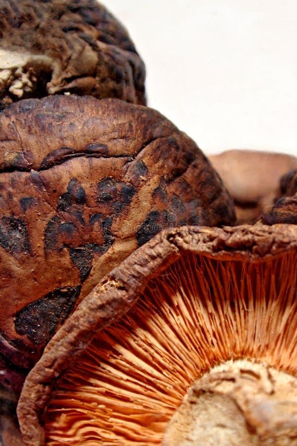 Mushrooms royalty free stock images