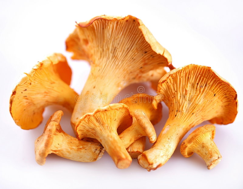 Mushrooms. Objects on white background stock photos