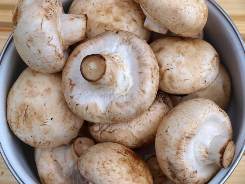 Download Mushrooms - agaricus stock photo. Image of close, hard - 11123120