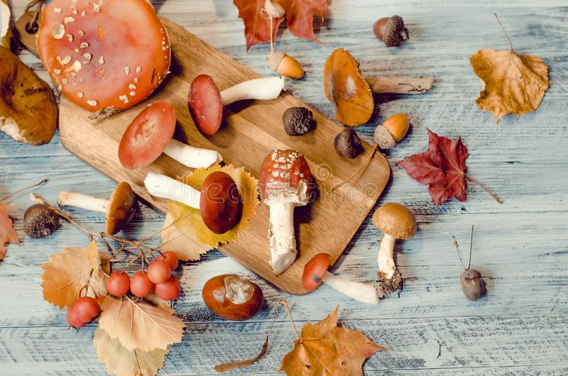 Mushrooms amidst leaves and acorns, nature autumn card stock images