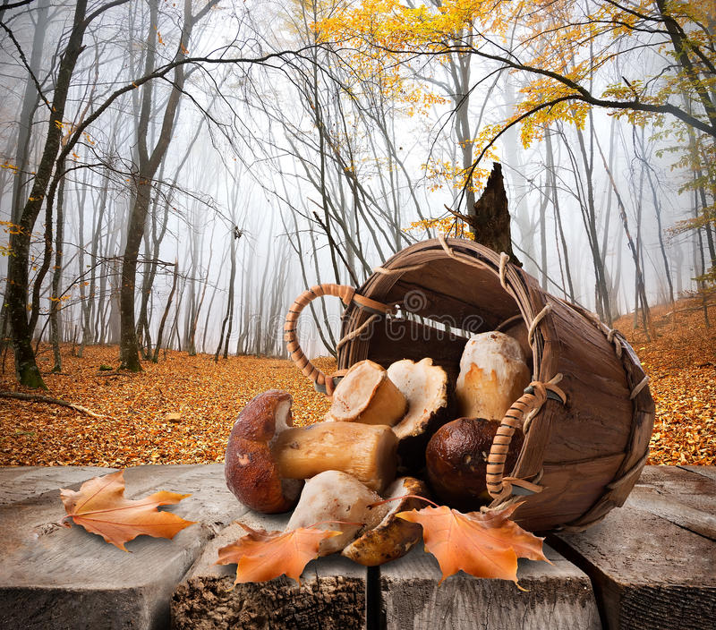 Mushrooms and autumn forest. Mushrooms in a basket and autumn forest royalty free stock photography