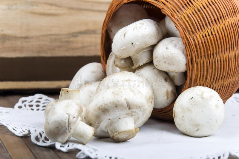 Mushrooms in a basket. On a white napkins royalty free stock images