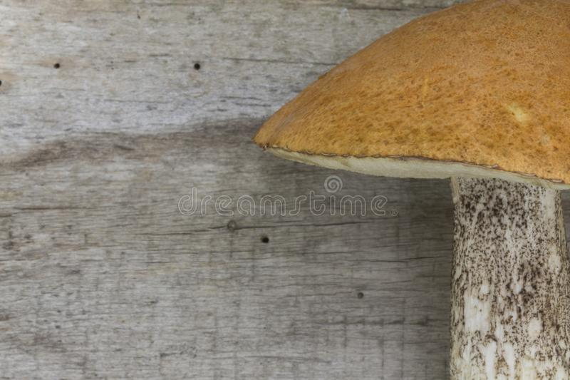 Mushrooms Brown Birch Bolete Leccinum scabrum; Boletus scaber. On the old wooden board. Brown boletus. Background. Top view royalty free stock photo