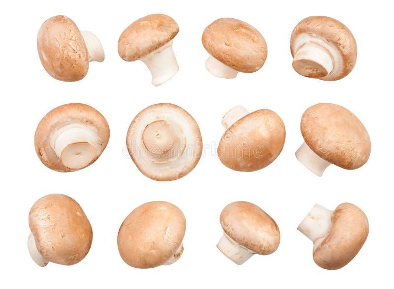 Mushrooms. Brown mushrooms on white background stock photos