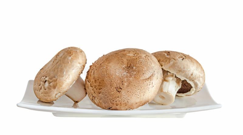 Mushrooms champignon, Agaricus bisporus on a white plate, close. Up, white background stock photography