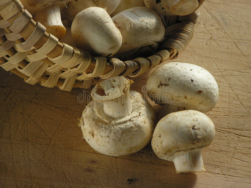 Mushrooms close-up stock images