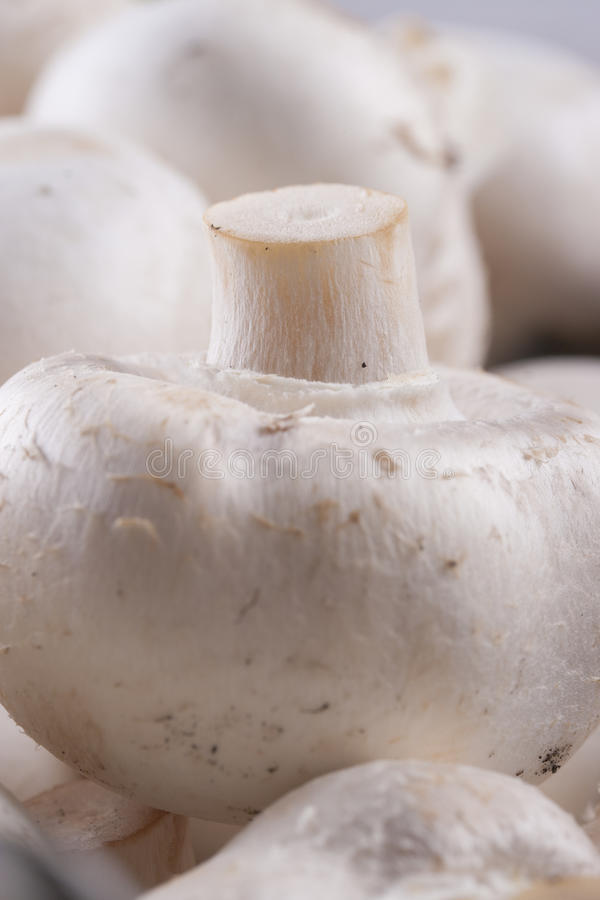 Download Mushrooms stock image. Image of healthy, agaricus, up - 33424517
