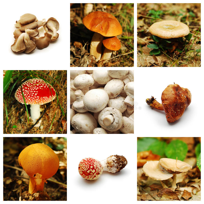 Mushrooms collection royalty free stock image