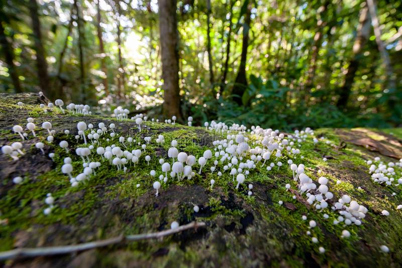 Mushrooms in rainforest stock image
