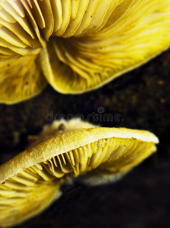 Mushrooms Royalty Free Stock Photo