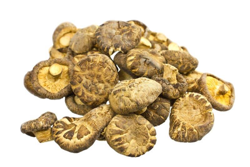 Download Mushrooms Stock Photos - Image: 30519193