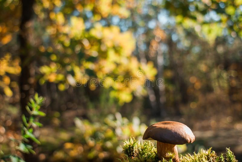 Mushrooms in Forest Scene royalty free stock photo