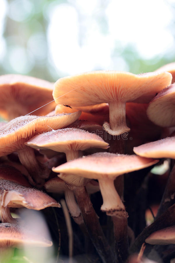 Mushrooms in the forrest. stock image