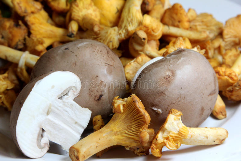 Mushrooms - fresh and raw royalty free stock image