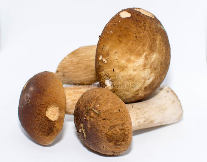Mushrooms gathered in the woods. royalty free stock photo