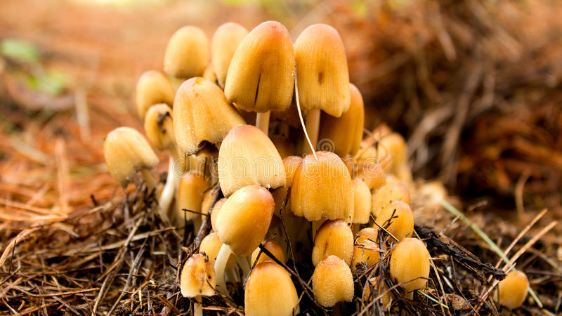 Download Mushrooms stock image. Image of pine, growing, fresh - 92883453