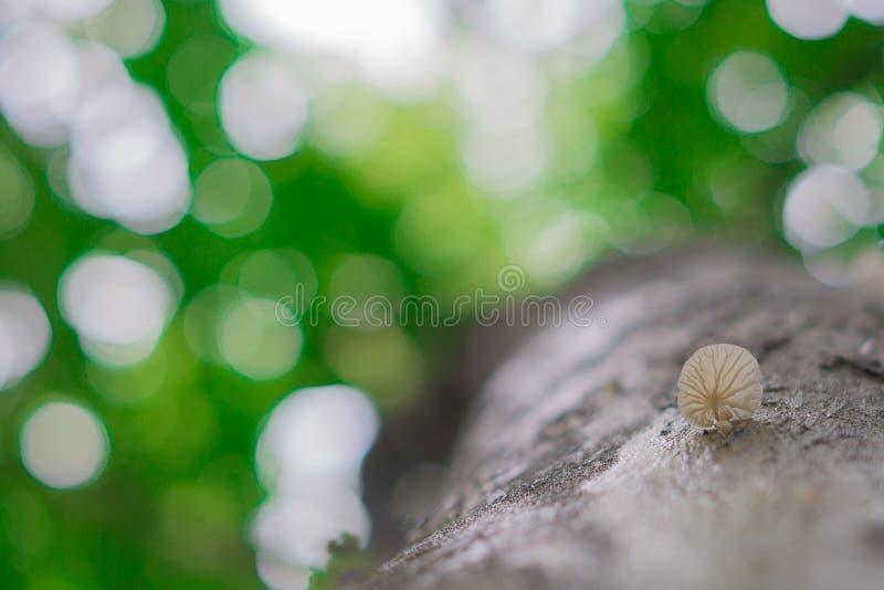 Mushrooms grow on trees stock photography