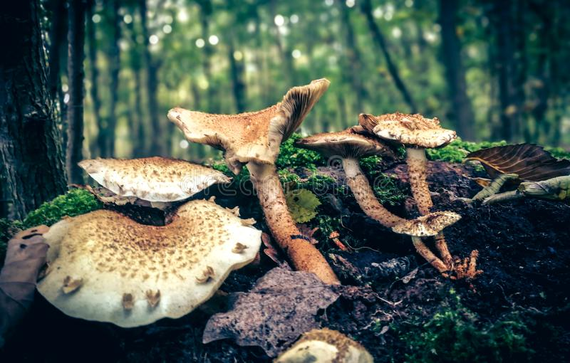 Mushrooms growing in forest stock photo