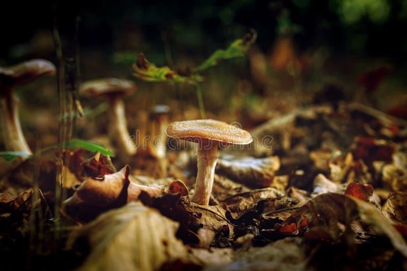 Mushrooms Growing Outdoors Free Public Domain Cc0 Image