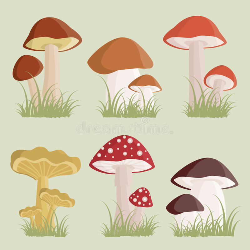 Mushrooms. Illustration of the different kinds of mushrooms stock illustration
