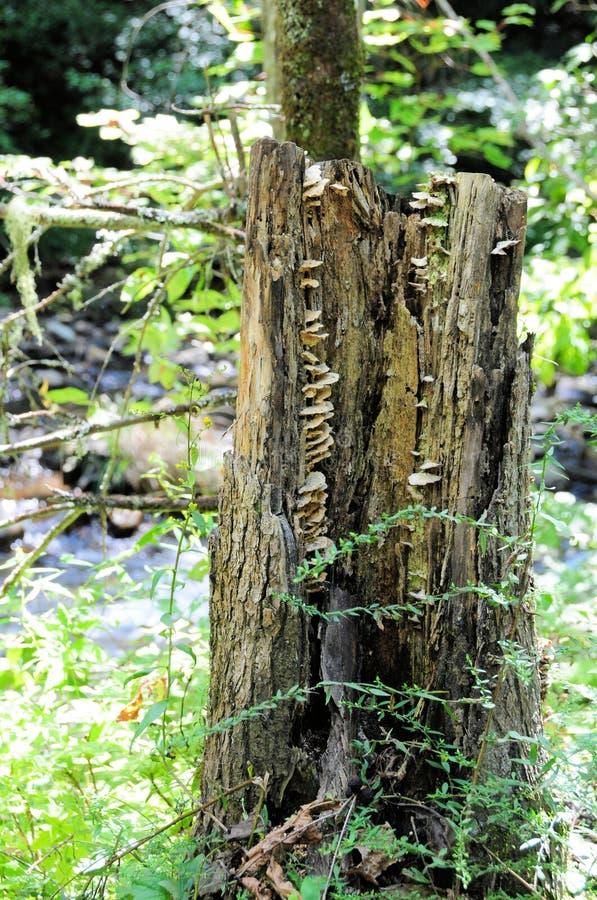 Download Mushrooms Inside Tree Trunk Stock Image - Image: 26627051