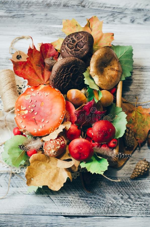 Mushrooms and leaves around board, nature autumn card royalty free stock photo