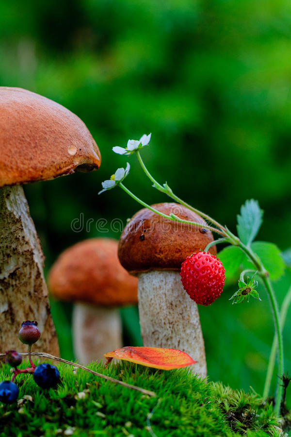 Mushrooms in the moss. Close up mushrooms in the moss stock photos