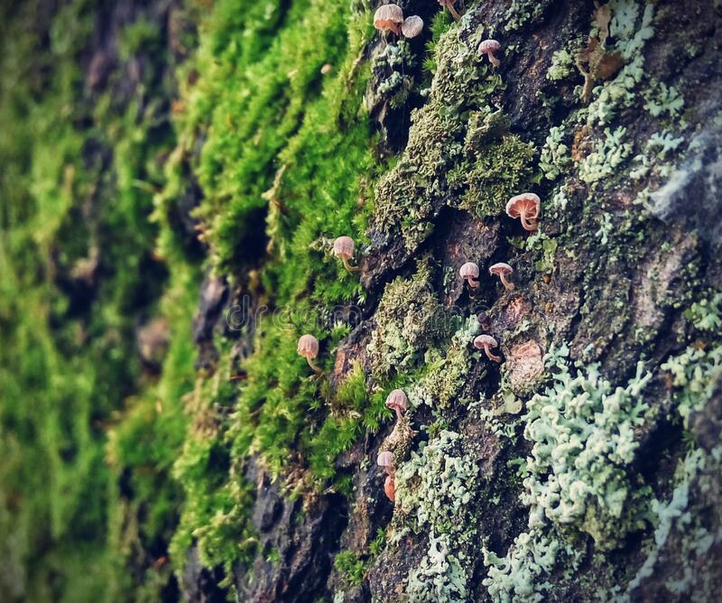 Mushrooms and moss on rock royalty free stock photo