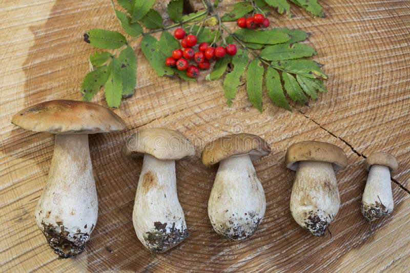 Mushrooms and mountain ash on a wooden background. Close up stock images