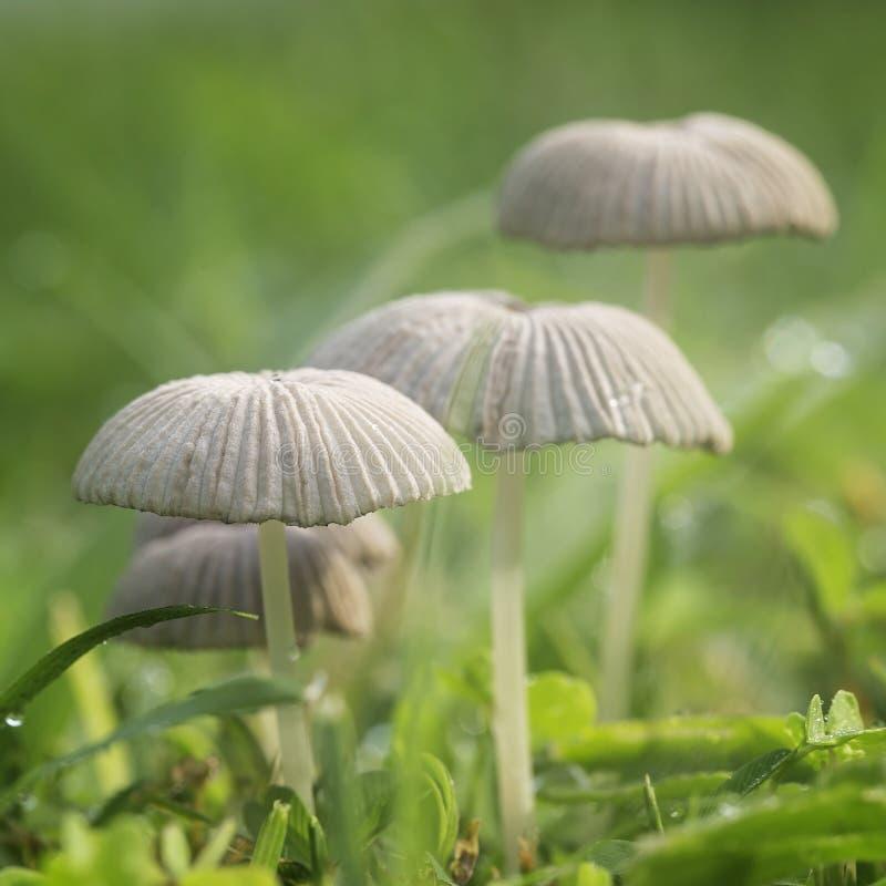 Mushrooms after the rain stock image