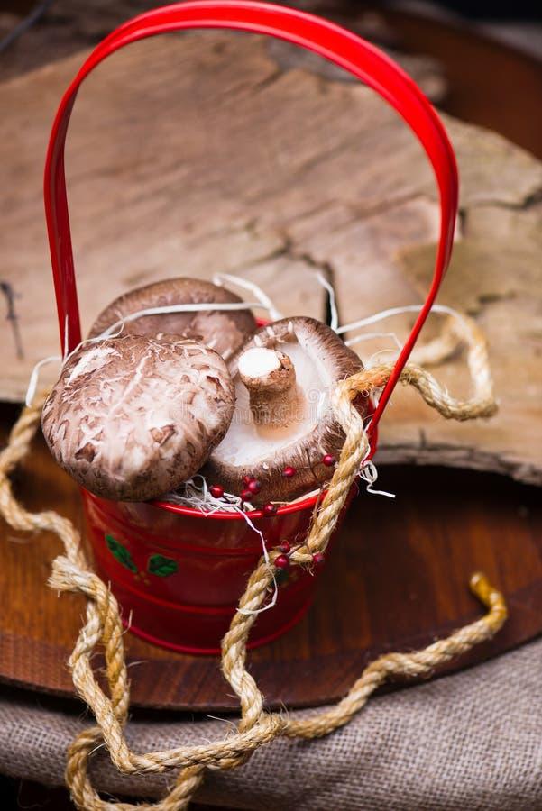 Mushrooms in red basket royalty free stock photos