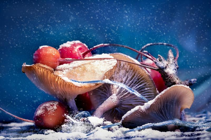 Mushrooms and red berries in snow and frost on a blue background. Christmas artistic image stock image