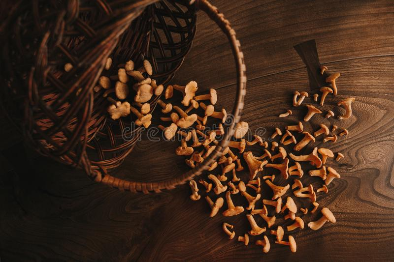 Mushrooms on the table stock photography